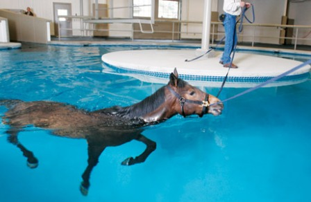Equine Swimming Pool